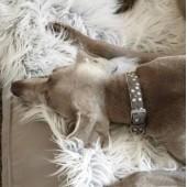 Luxe hondendekens